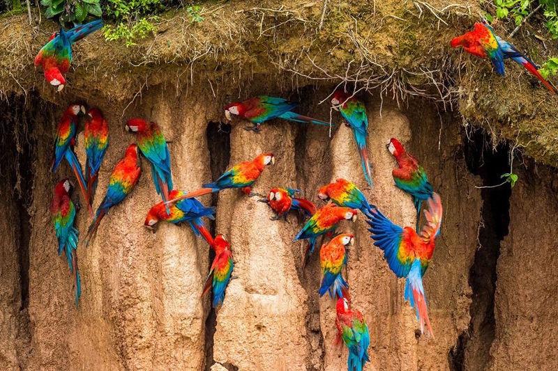 4 reasons to add Tambopata to your Peru itinerary