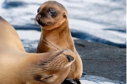 Sustainability Snapshot: Ecoventura Galapagos