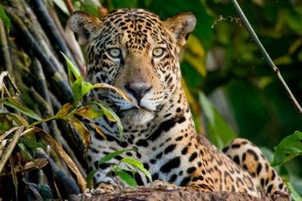 Sustainability Snapshot: Rainforest Expeditions